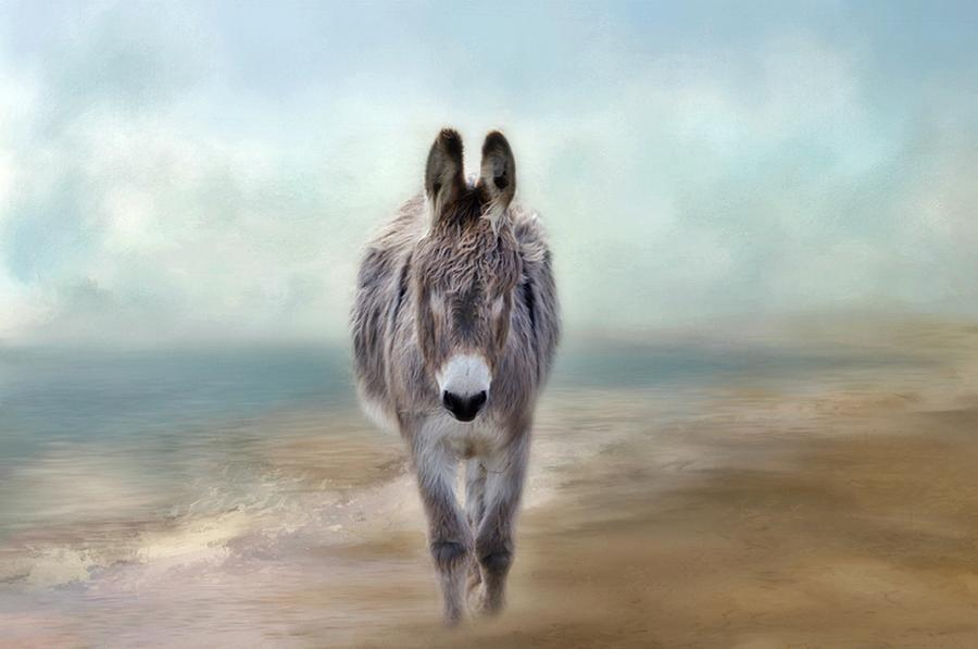 Donkey Photograph - Nester by Stephanie Calhoun