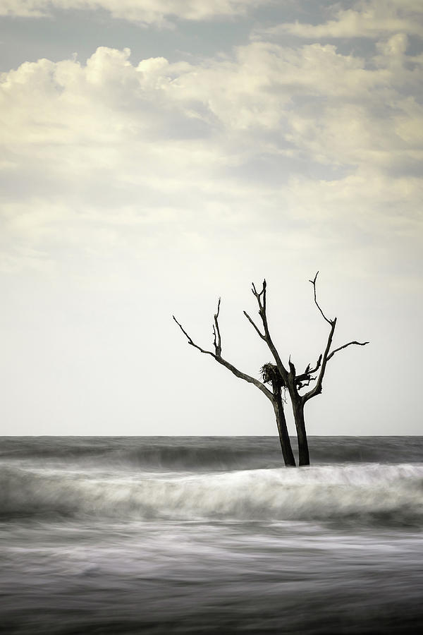 Bulls Island Photograph - Nesting by Ivo Kerssemakers