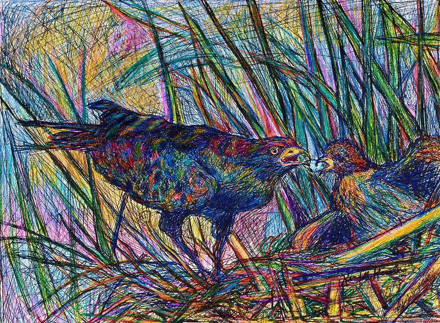 Hawk Drawing - Nesting by Kendall Kessler