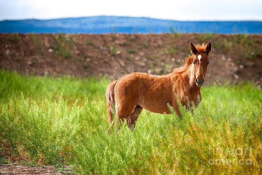 Nevada Mustang Baby - Spring 2016 by Vinnie Oakes