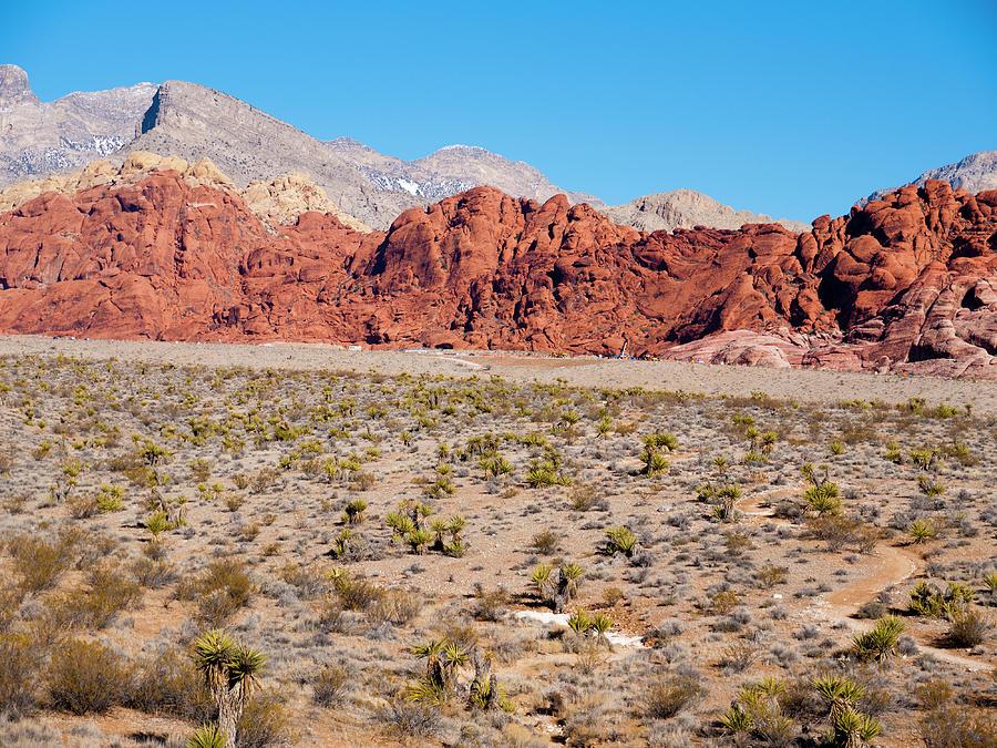 America Photograph - Nevadas Red Rocks by Rae Tucker