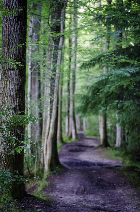 Never Ending Trail Photograph
