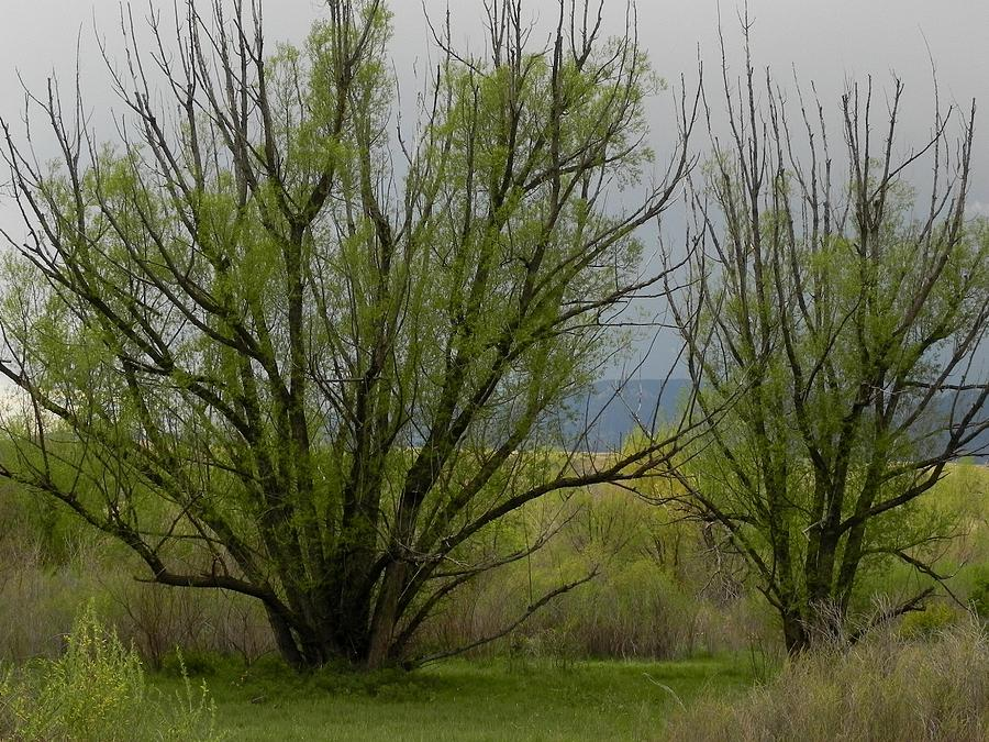 Trees Photograph - New And Green by Adrienne Petterson