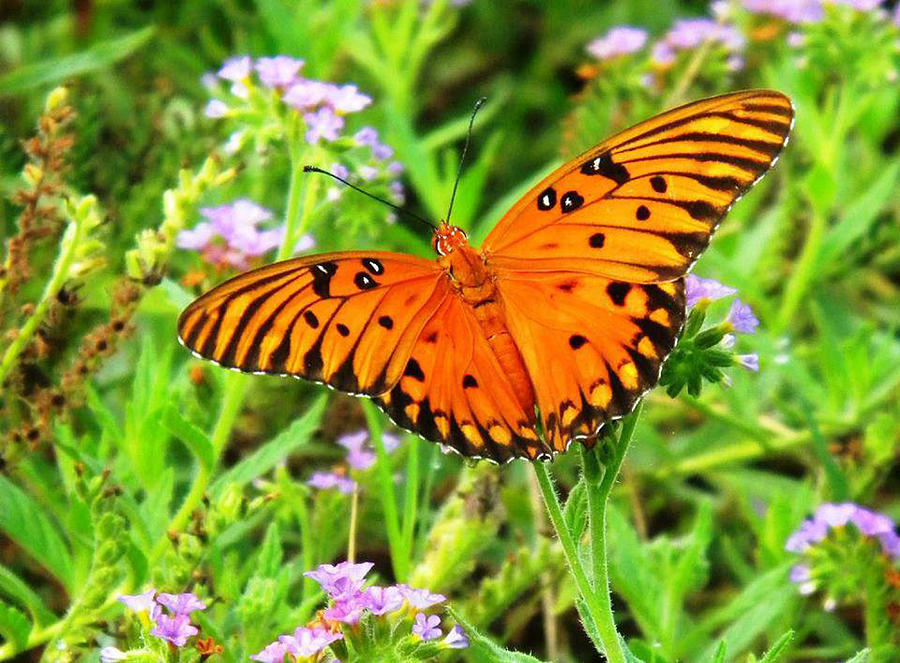 Nature Digital Art - Orange Butterly Windows From Heaven by Matthew Seufer
