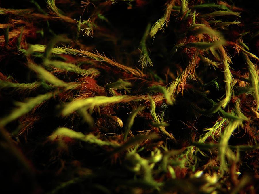 Moss Photograph - New Beginnings by Nancy Morrison