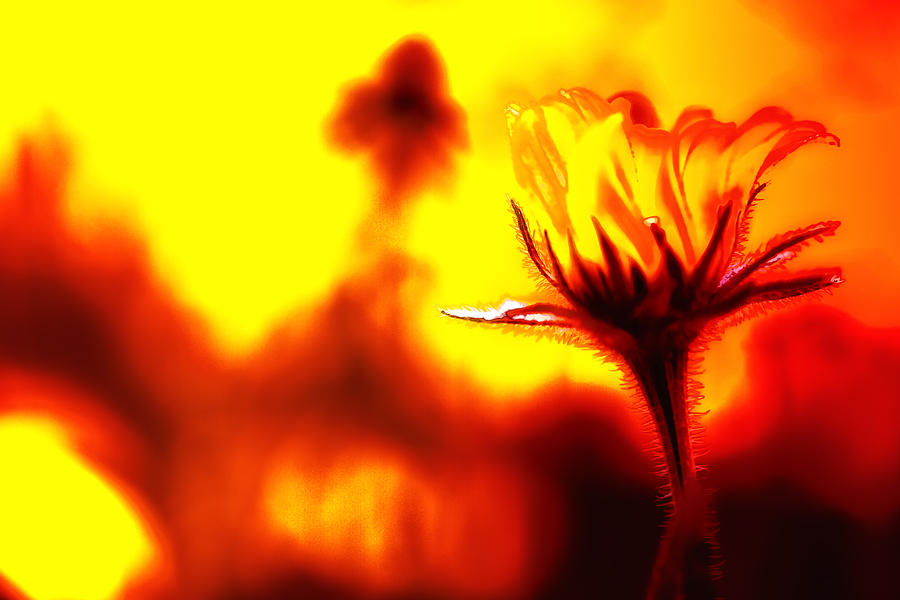 Flower Photograph - New Bloom by Jim Dohms