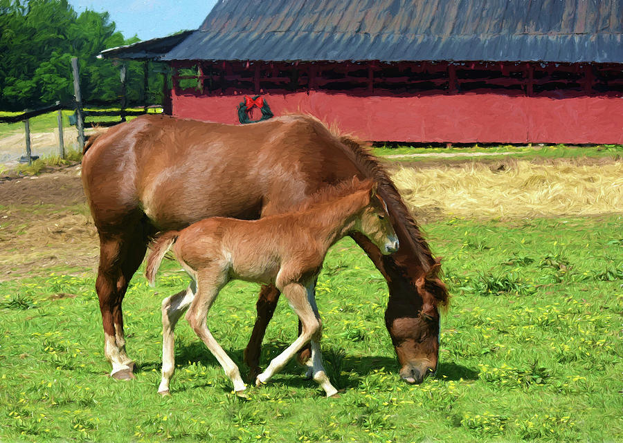 Foal Photograph - New Born Foals First Christmas by Sandi OReilly
