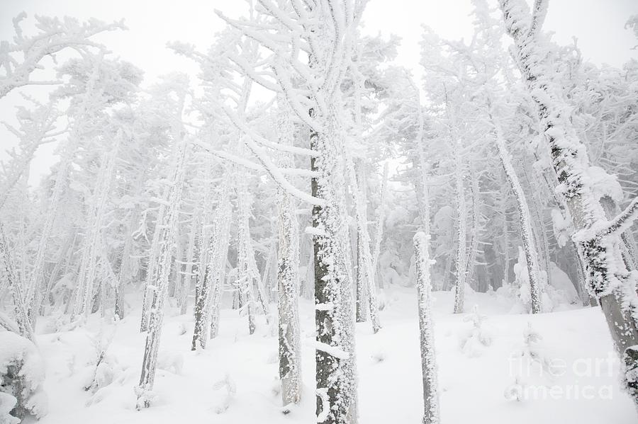 Snow Covered Photograph - New England - Snow Covered Forest by Erin Paul Donovan