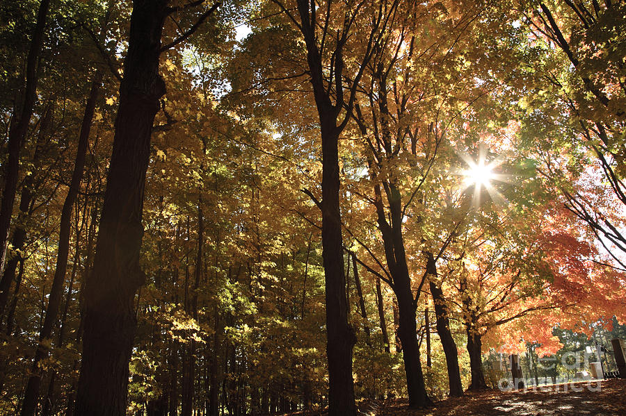 Forest Canopy Photograph - New England Autumn Forest by Erin Paul Donovan
