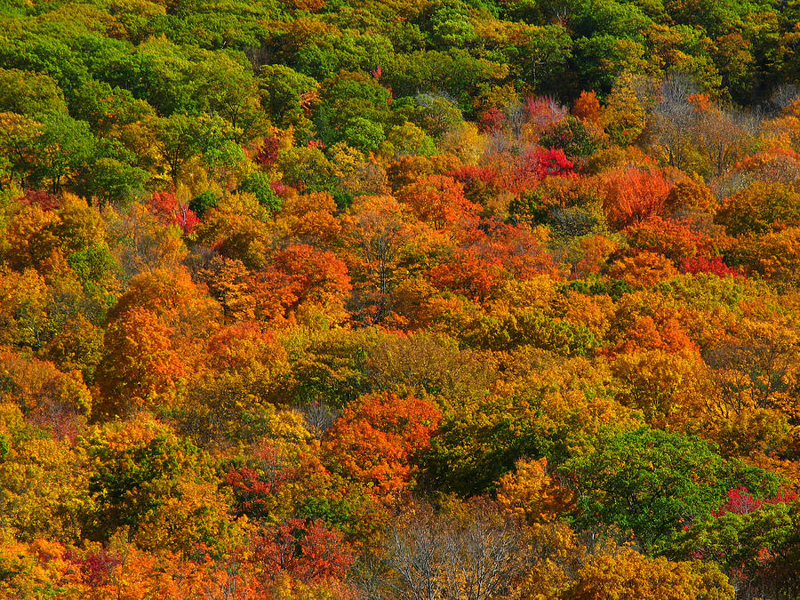 Landscape Photograph - New England Fall Foliage Peak  by Juergen Roth