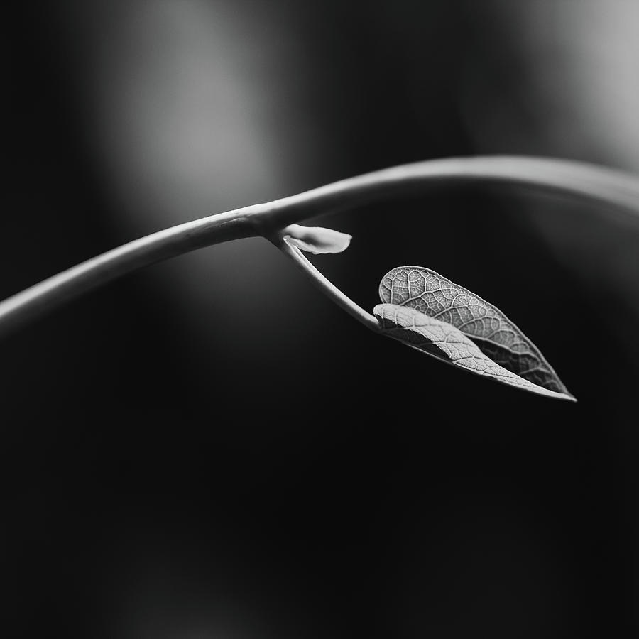 New Growth by Laura Roberts