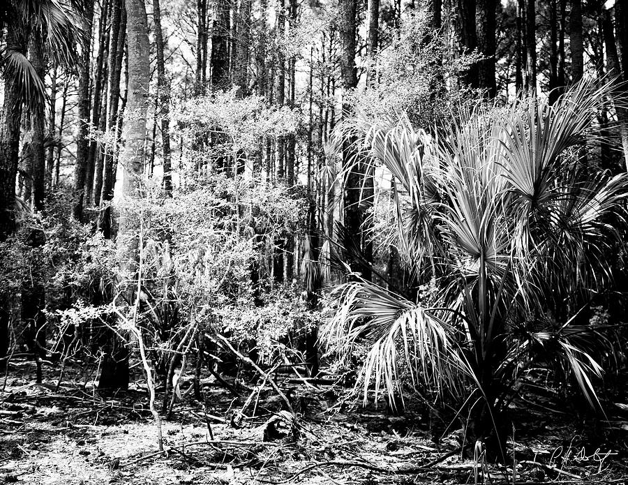Hunting Island Photograph - New Growth  by Phill Doherty