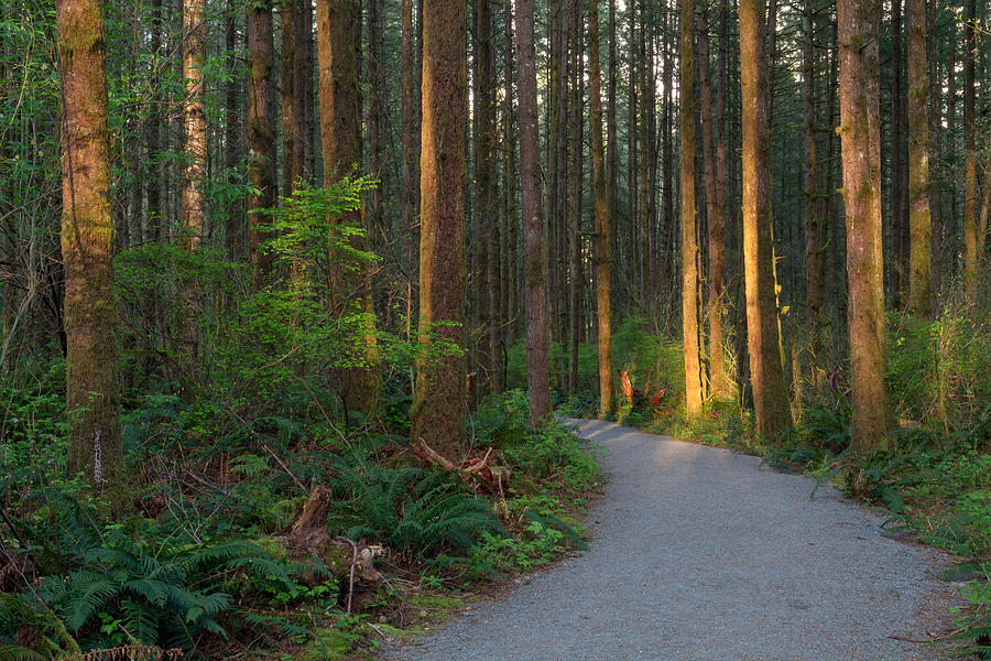 British Columbia Photograph - New Hiking Trail by Michael Russell