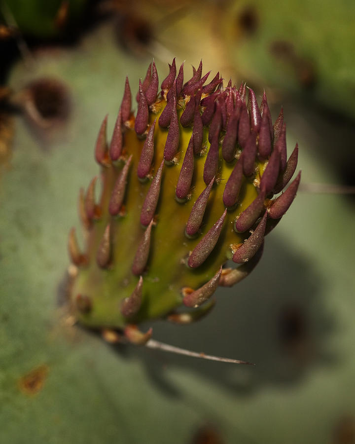 Cactus Photograph - New Leaf by Kelley King