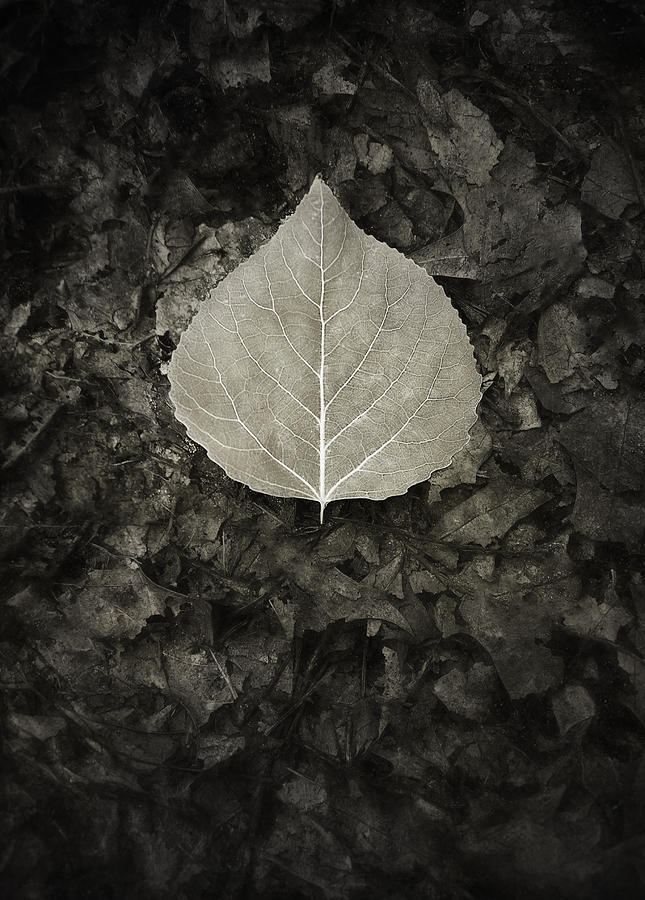 New Leaf On The Old Photograph
