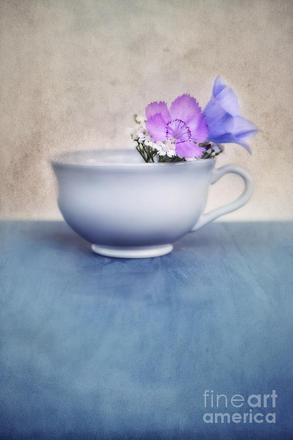 .cup Photograph - New Life For An Old Coffee Cup by Priska Wettstein