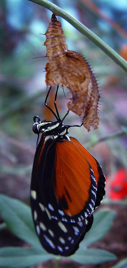 Insects Photograph - New Life by Robert Knight