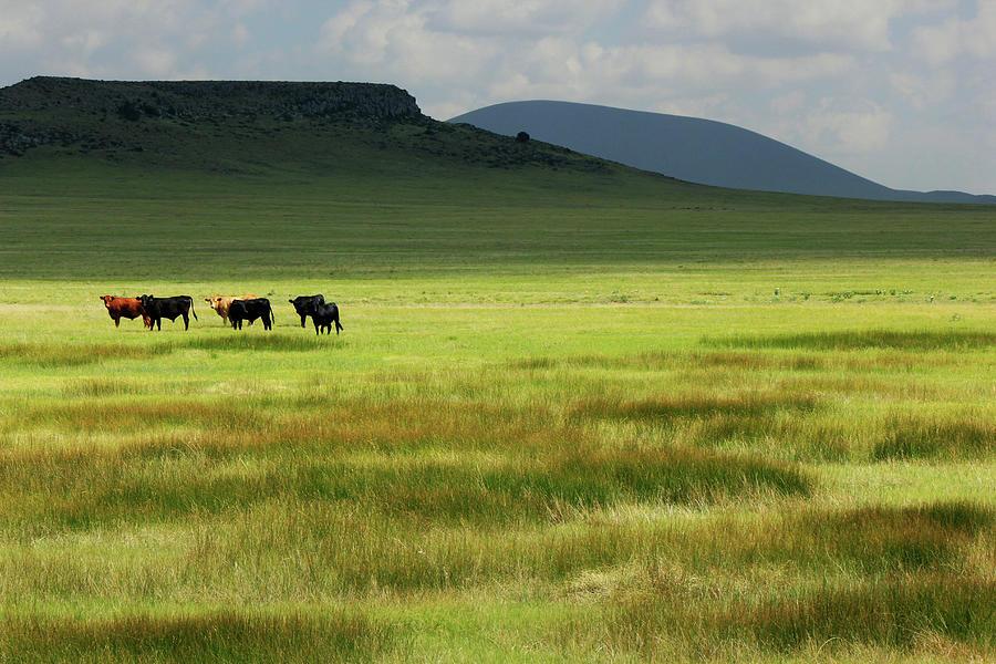 New Mexico Pasture Photograph