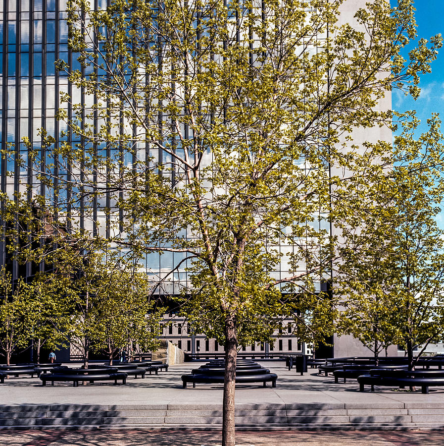 Trees on Fed plaza by Mike Evangelist