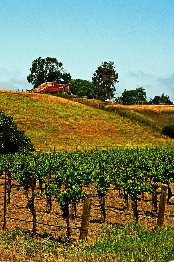 Vines Photograph - New Vineyard by Gary Brandes