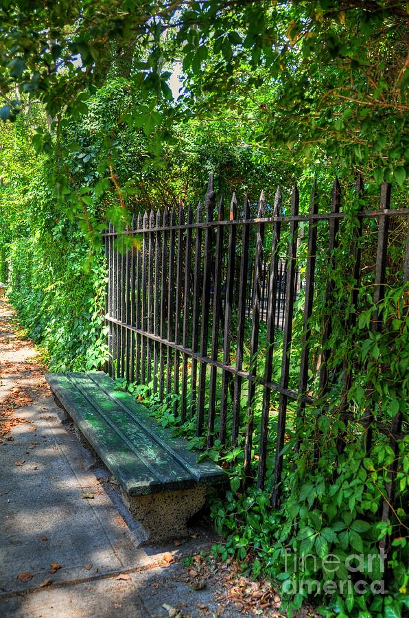 New York Park Bench Photograph By Kelly Wade