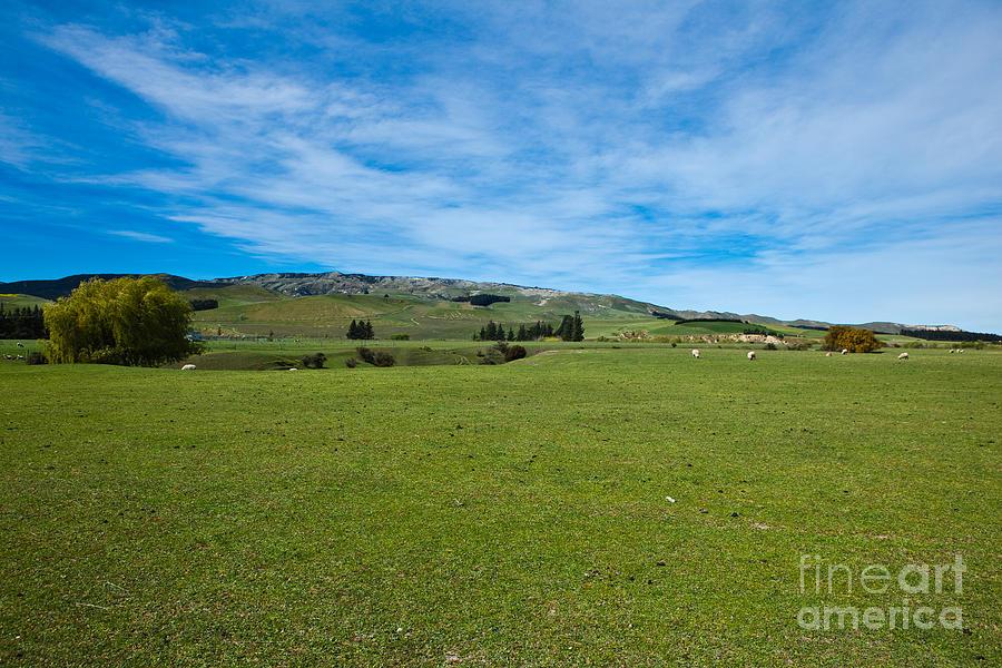 Green Photograph - New Zealand Green Rolling Hills by John Buxton