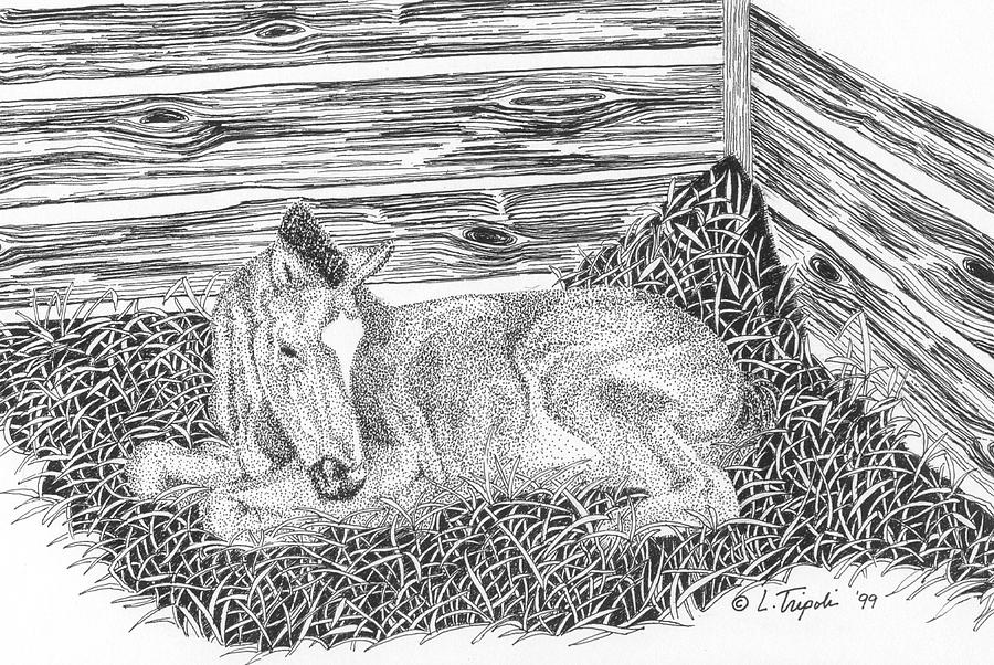 Horse Drawing - Newborn by Lawrence Tripoli