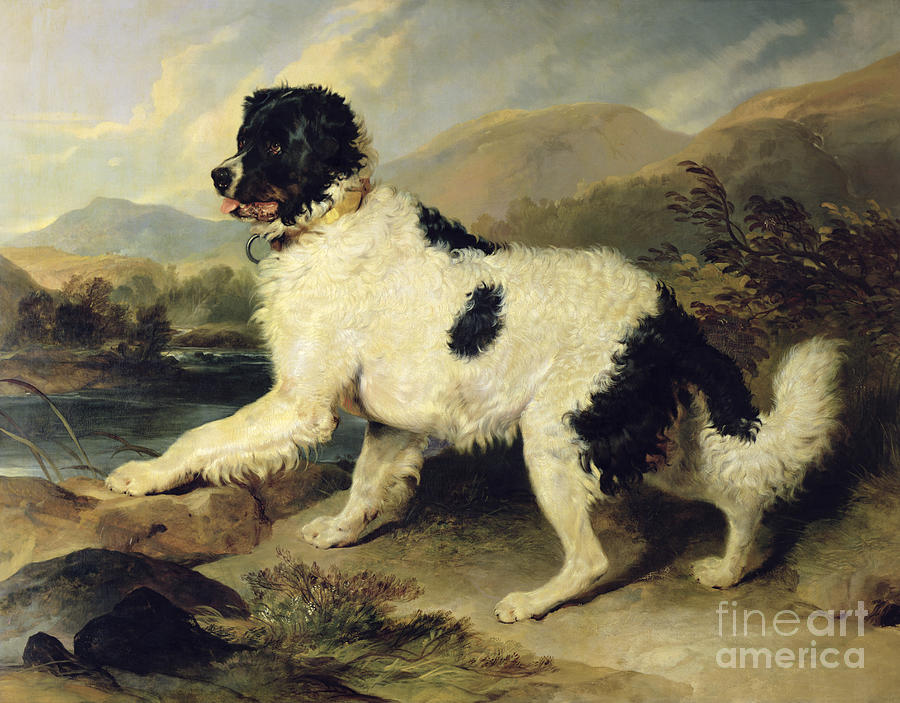 Newfoundland Painting - Newfoundland Dog Called Lion by Sir Edwin Landseer