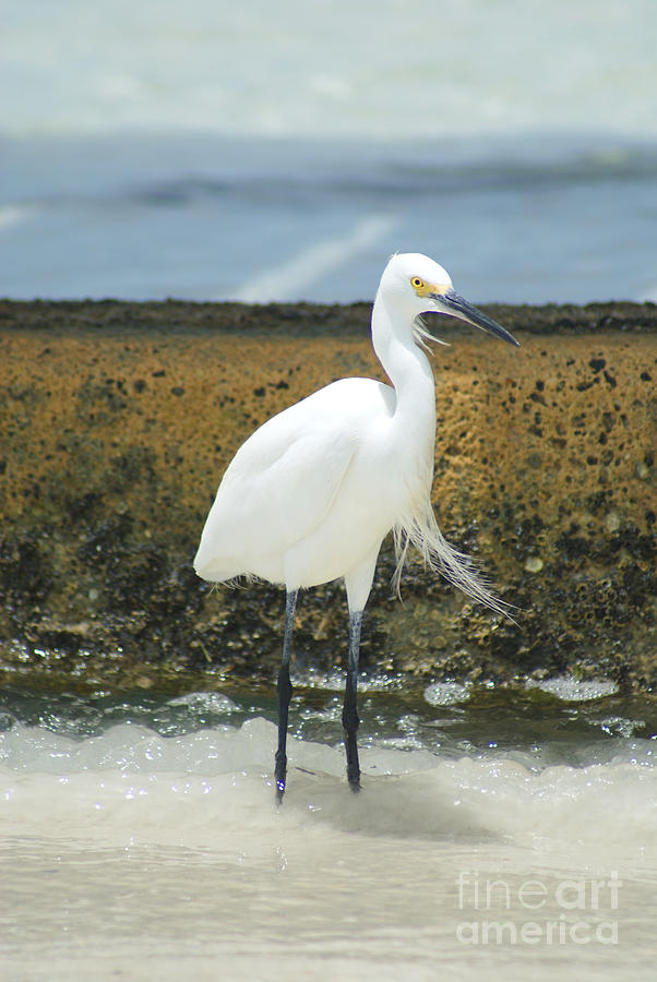 Bird Pyrography - Next To The Pier by Jamie Gress