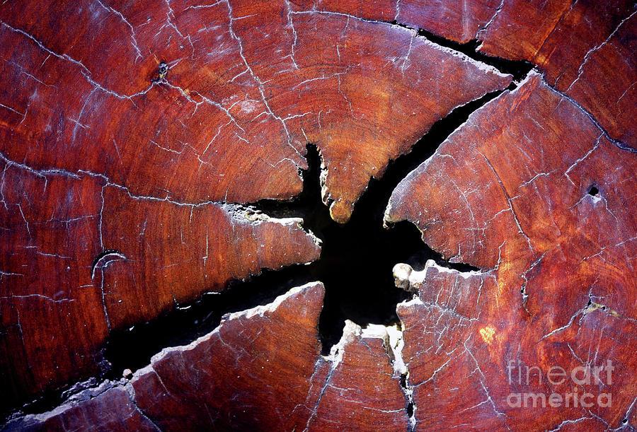 Wood Photograph - Niche by Stephen Mitchell