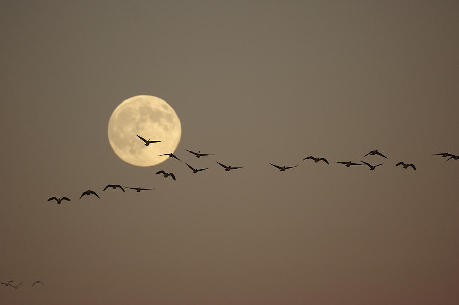 Bird Photograph - Night Beauty by Philippe Francis