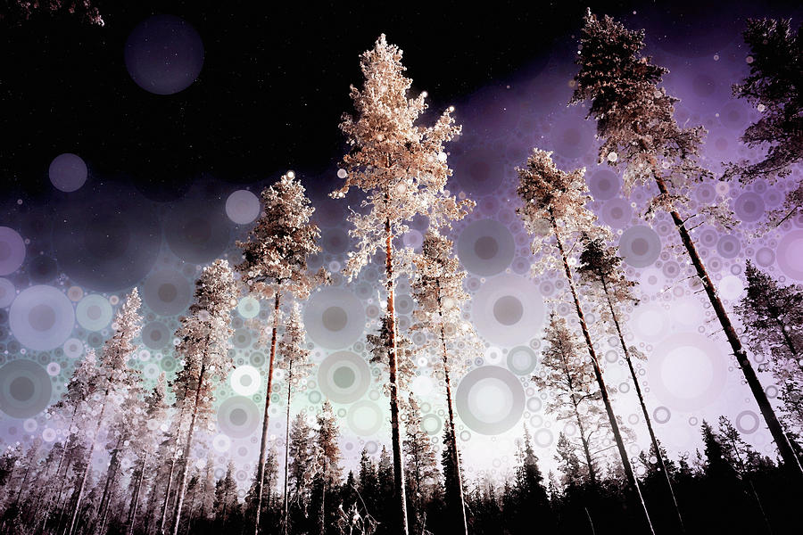 Tall Trees Mixed Media - Night Falling by Susan Maxwell Schmidt