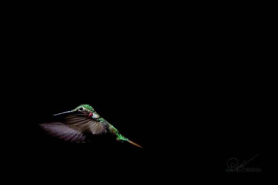 Night Flight by PiperAnne Worcester