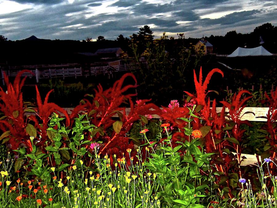 Garden Photograph - Night Garden Series 3 by Elizabeth Tillar