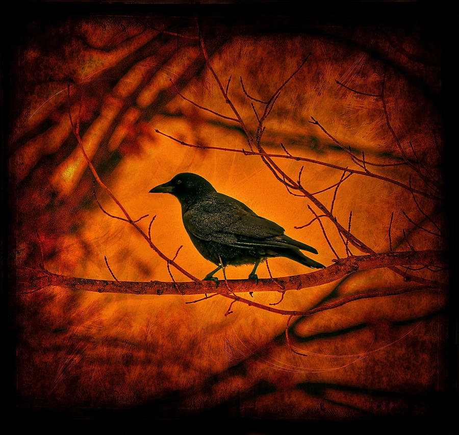 Bird Photograph - Night Guard by Evelina Kremsdorf