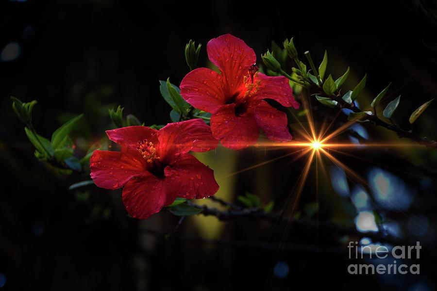 Red Photograph - Night Hibiscus by Al Bourassa