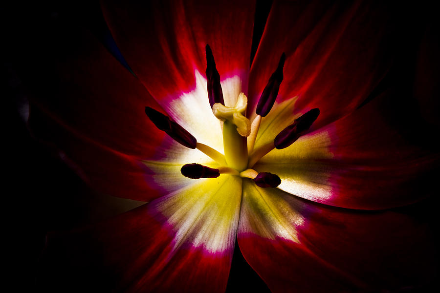 Floral Photograph - Night Lily Two by John Ater