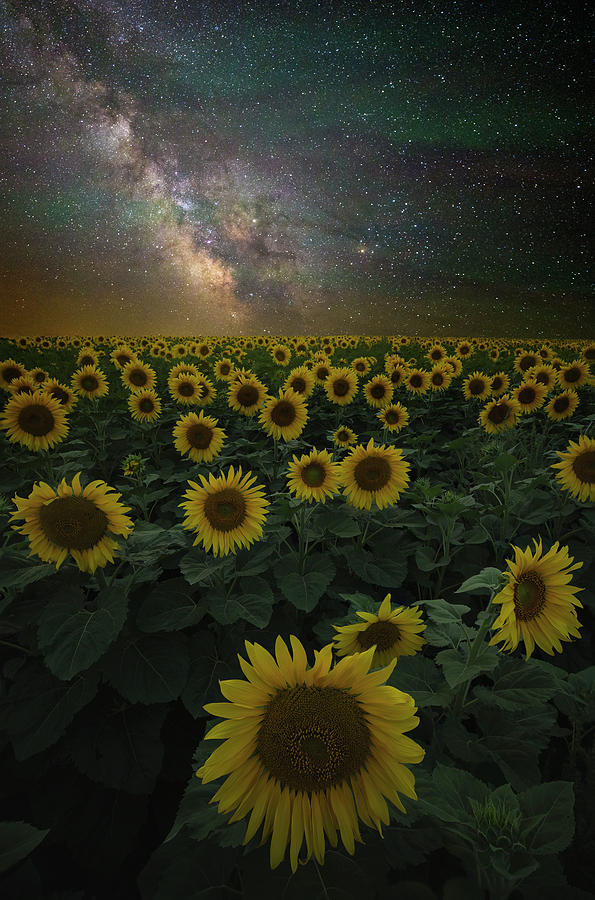 Yellow Photograph - Night Of A Billion Suns by Aaron J Groen