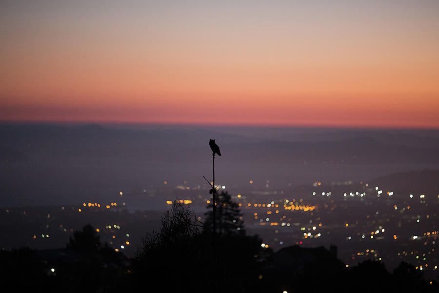 San Francisco Photograph - Night Owl Over San Francisco by Digiblocks Photography