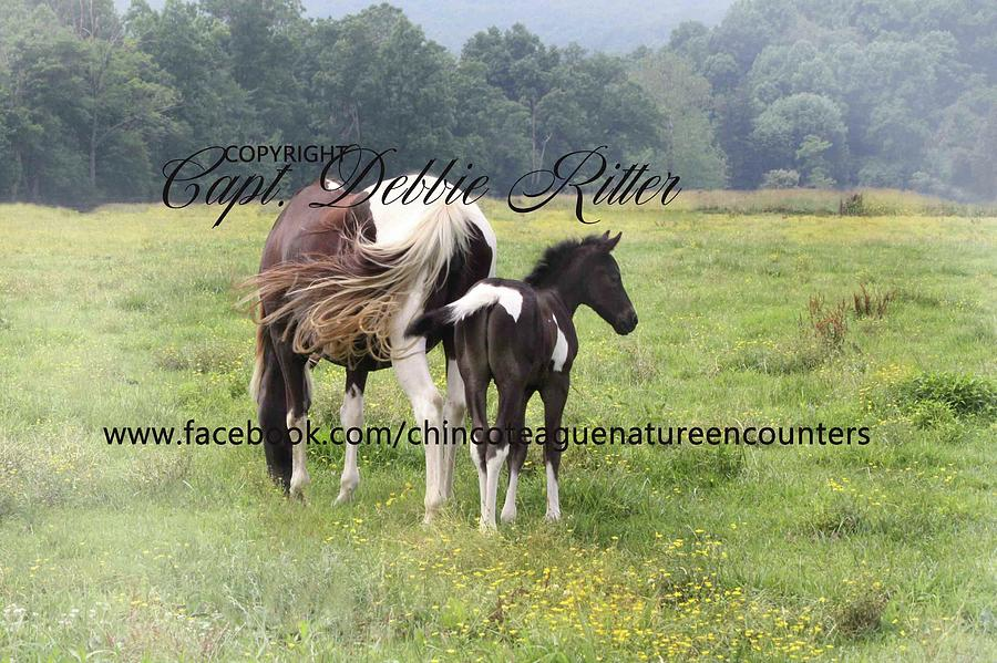 Equine Photograph - Night Thunder And Mother Michael Pryor Foal by Captain Debbie Ritter