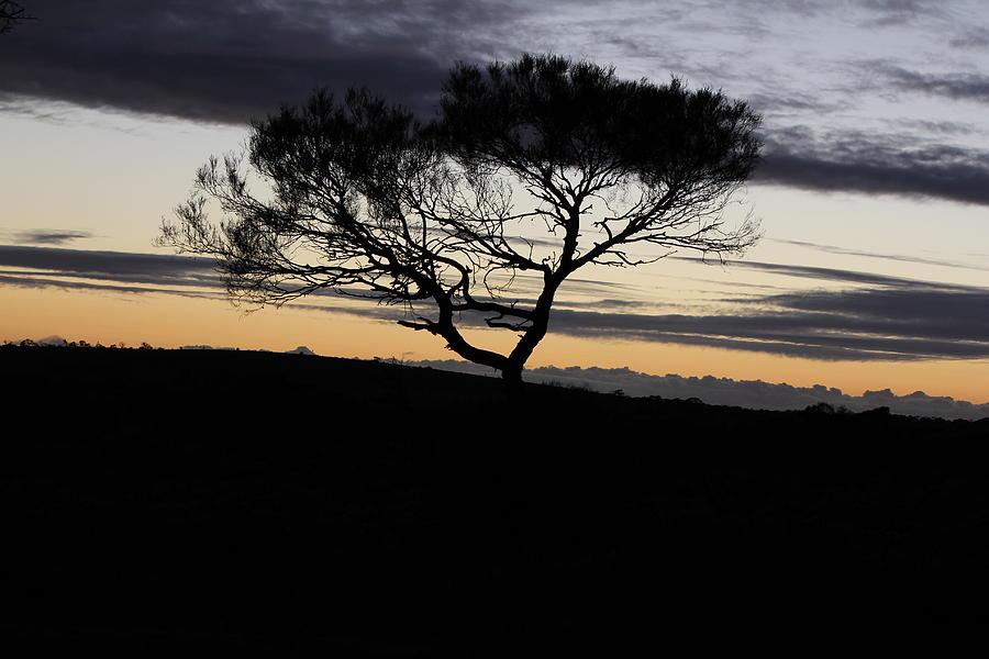 Landscape Photograph - Night Tree by Troy Anderson