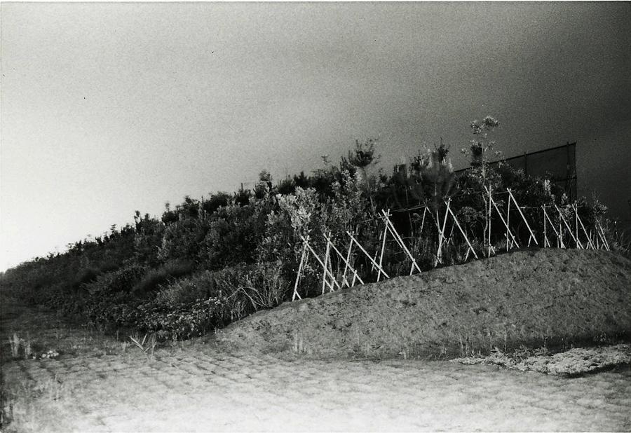 Time Exposure Photograph - Night Windbreak by Braven Smillie