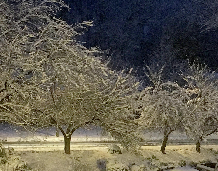Night with Snowy Trees by Lois Johnson