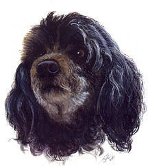 Pet Portrait Painting - Nikki by Janice M Booth