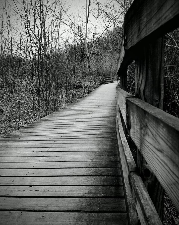 Nine Mile Run Trail Photograph