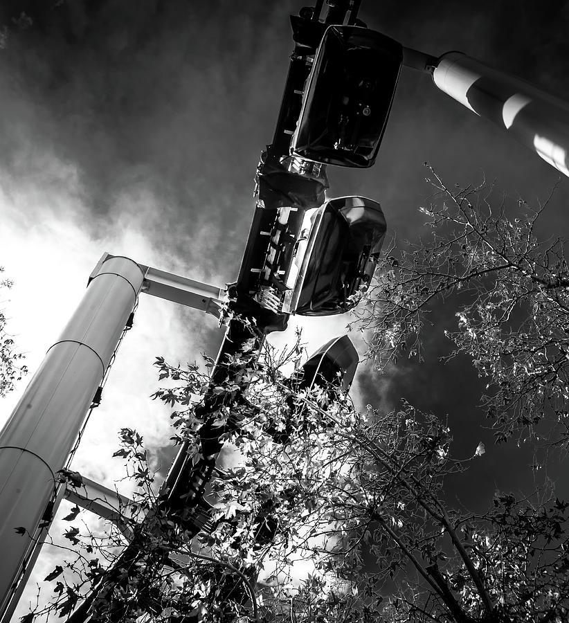 Magic Mountain Photograph - Ninja And The Trees Bw by Matthew Nelson