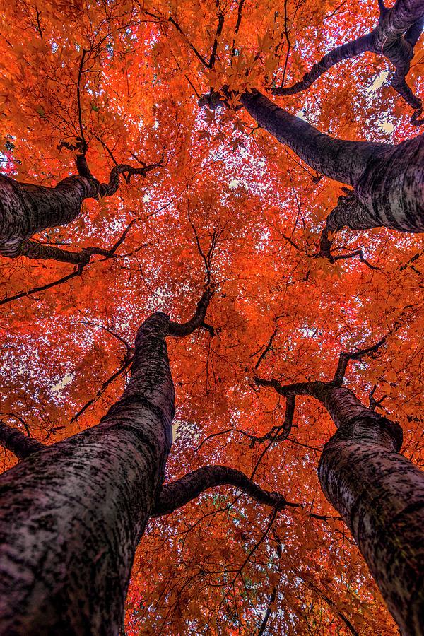 Fall Photograph -  Nishinomiya Japanese Garden - Autumn Trees by Mark Kiver