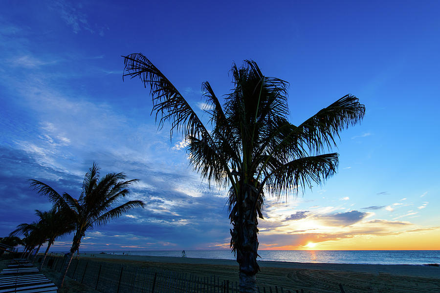 NJ Palm by Marlo Montanaro