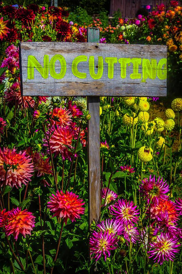 Dahlia Photograph - No Cutting Sign In Garden by Garry Gay