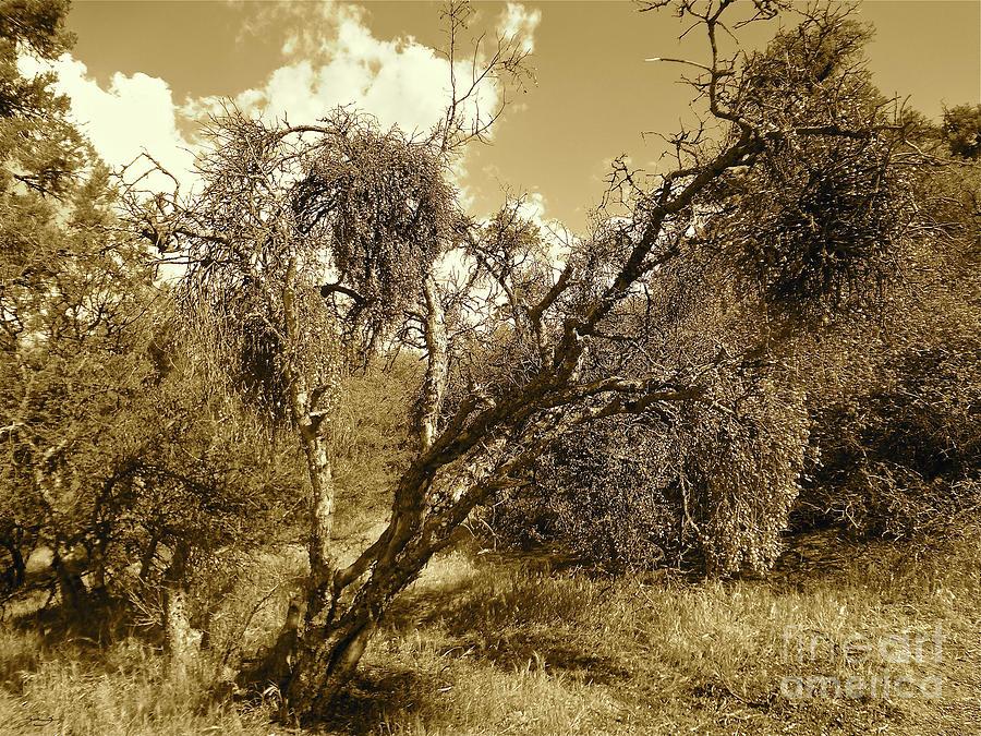 Trees Photograph - No Mans Safari by Gem S Visionary